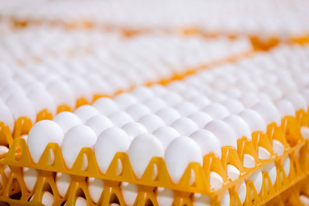 Plastic egg tray suppliers